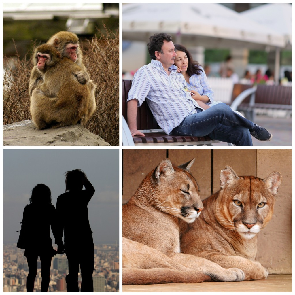 A collage: two monkeys hugging, a woman cuddling close with a man, two teenagers holding hands, and two lions laying next to each other