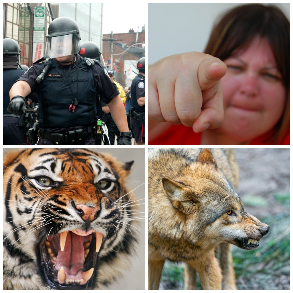 Collage: a man in SWAT gear, a woman pointing a finger, a tiger roaring, a wolf growling