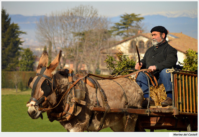A man riding a carriage being pulled by a donkey
