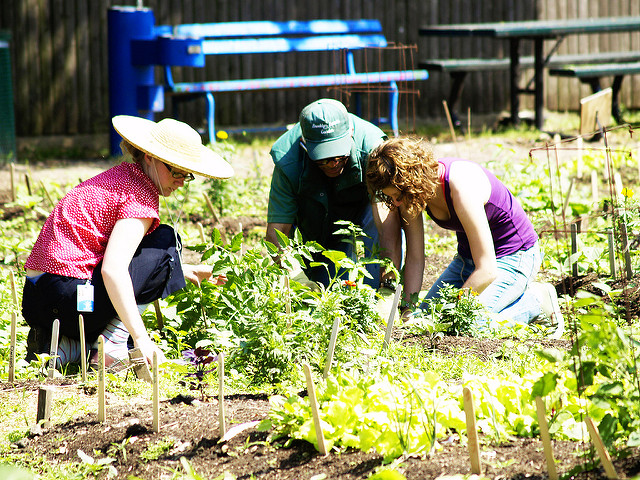 3 people planting vegetables