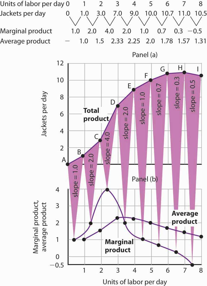 From Total Product to the Average and Marginal Product of Labor