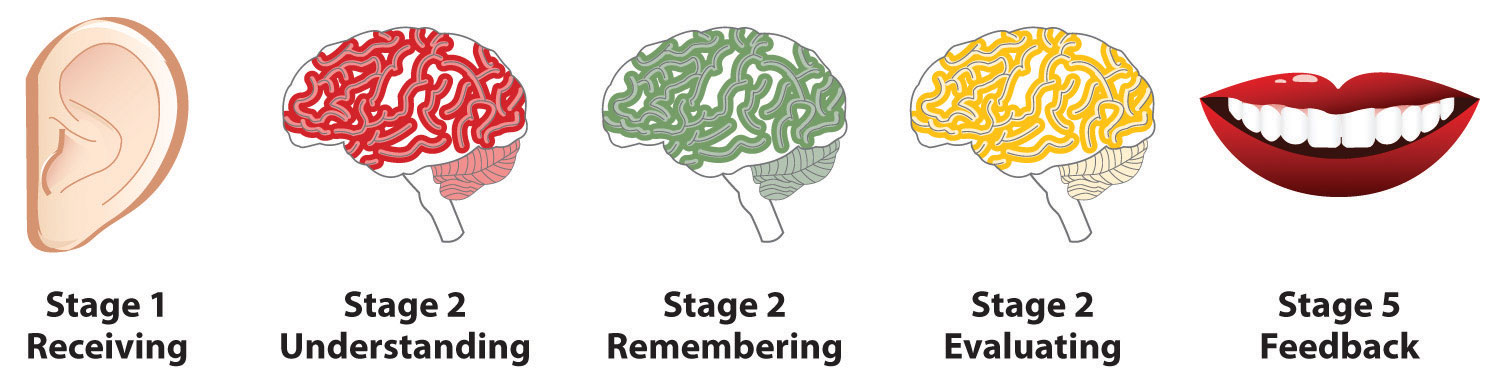 Stages of feedback: Receiving, Understanding, Remembering, Evaluating, and Feedback