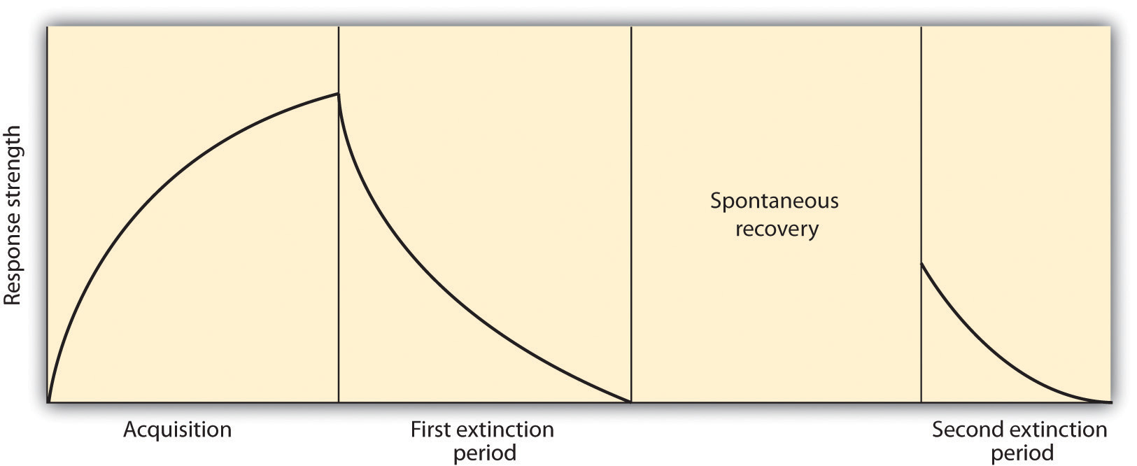 Acquisition: The CS and the US are repeatedly paired together and behavior increases. Extinction: The CS is repeatedly presented alone, and the behavior slowly decreases. Spontaneous recovery: After a pause, when the CS is again presented alone, the behavior may again occur and then again show extinction.