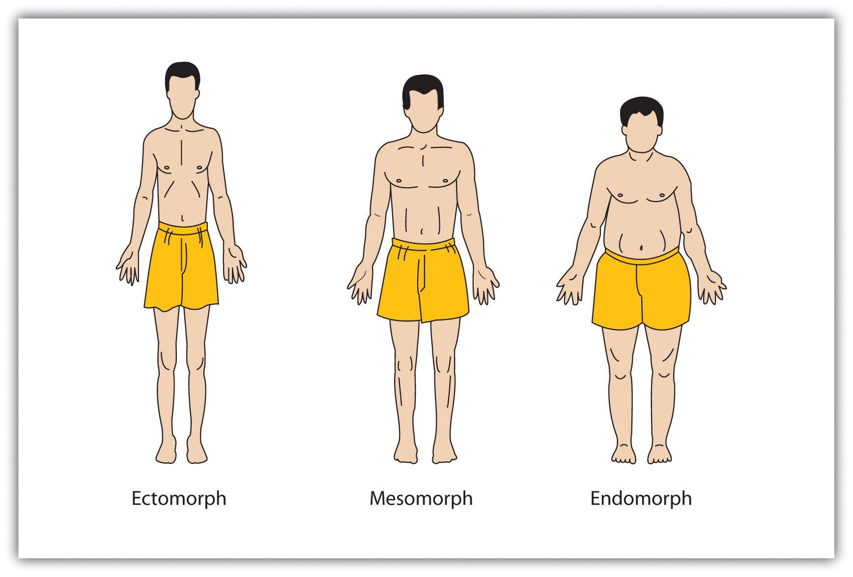Sheldon's Body Types (Ectomorph, Mesomorph, & Endomorph)