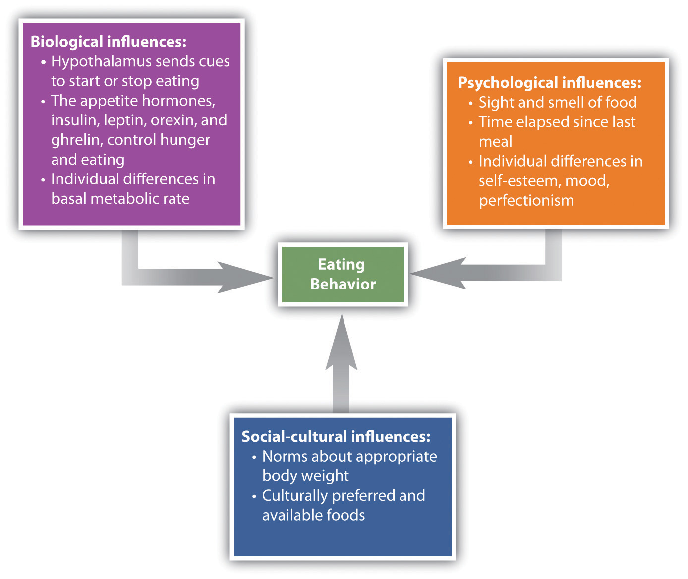 Biological, Psychological, and Social-Cultural Contributors to Eating