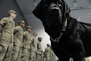 Therapy dog in the army