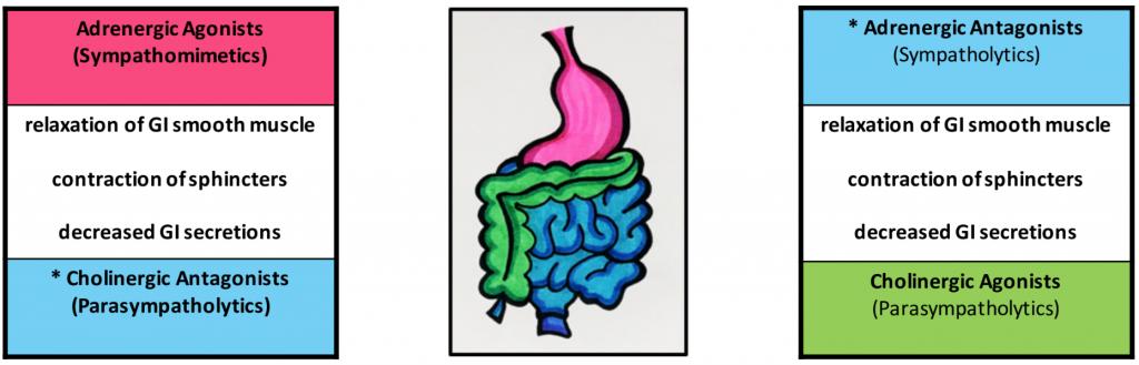 diagram of digestive system