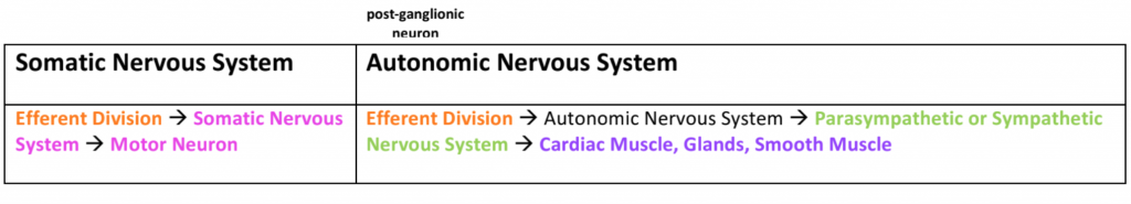 somatic and autonomic nervous system table