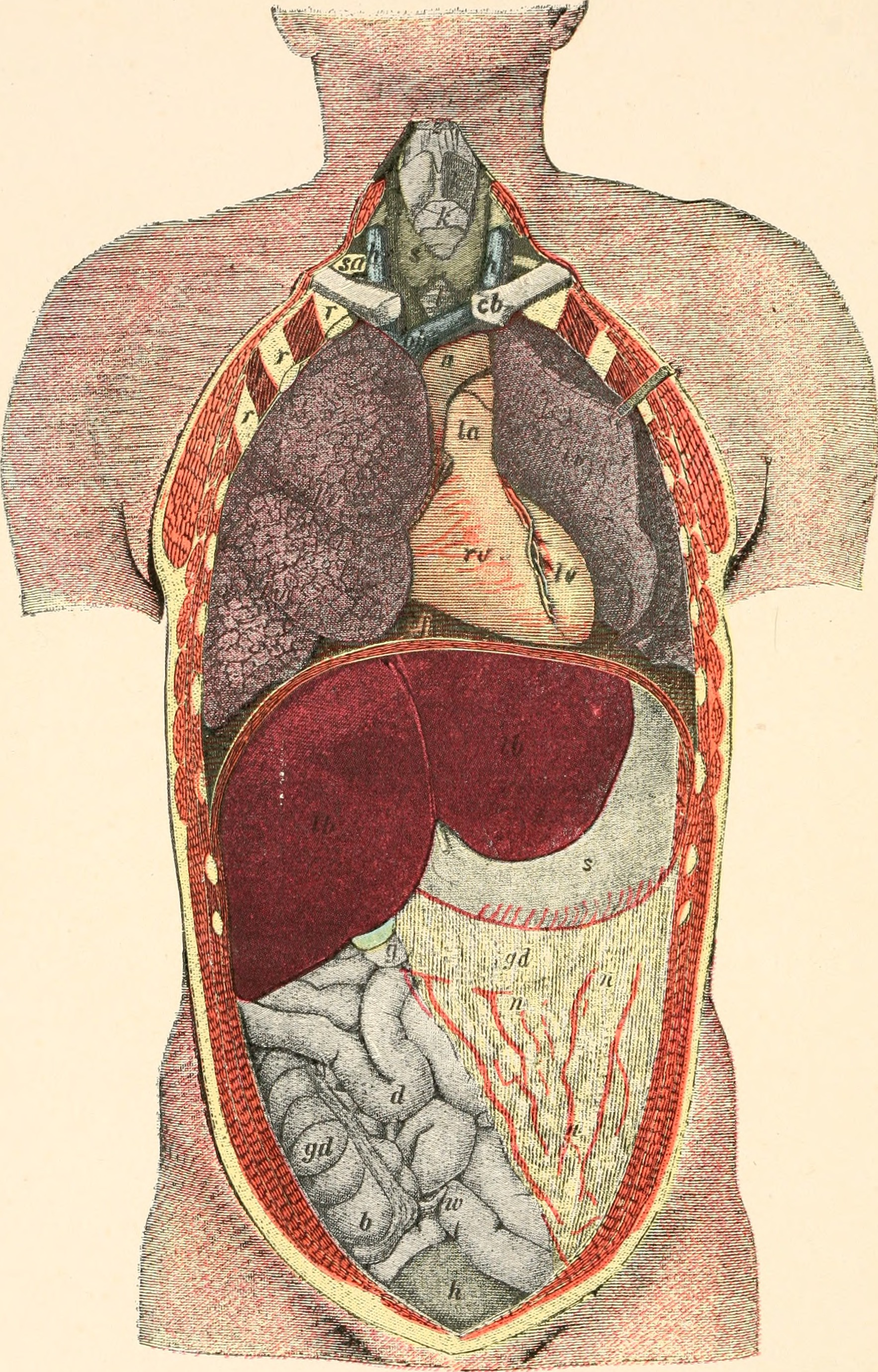 Cover image for Human Biology