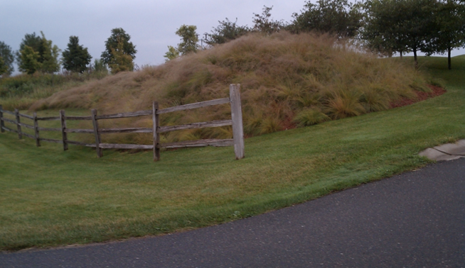 Because of their soil stabilization properties, native grasses and sedges make good choices for berms, slopes, and banks.
