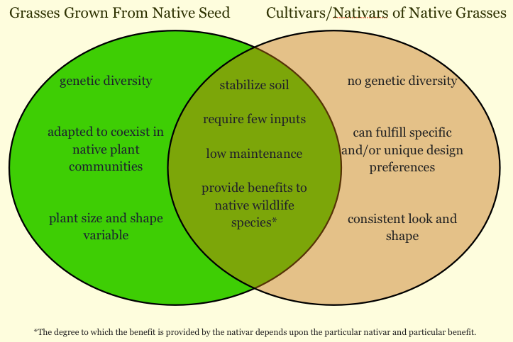 Venn digram describing the differences of grasses grown from native seeds vs. grasses grown from cultivars/nativars.
