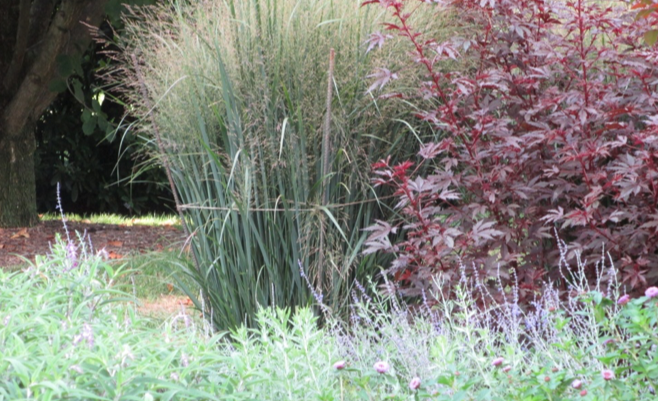 Grasses that lodge can be supported by staking and circling a string around the grass.